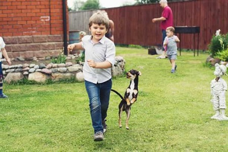 Canva - Photo Of Dog Beside Boy - Copy1